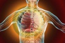 Lungenentzündung im Stadium der roten Hepatitis, konzeptionelle digitale Illustration. — Stockfoto