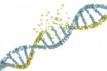 Colored DNA molecule damage on white background, genetic disorder conceptual illustration. — Stock Photo