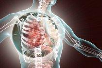 Neumonía lobar en etapa de hepatización roja, ilustración digital conceptual . - foto de stock