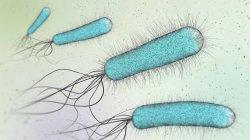 Ilustración 3d de bacterias en forma de barra azul . - foto de stock