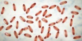 Gramnegative Pestbakterien yersinia pestis mit bipolarer Färbung, digitale Illustration. — Stockfoto