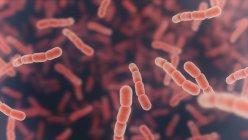 Streptococcus pneumoniae bacteria, ilustración digital . - foto de stock