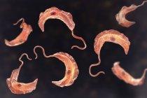 Illustration numérique de protozoaires parasites du trypanosome causant la maladie du sommeil transmise par le sang . — Photo de stock