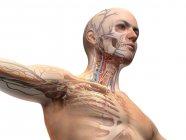 Diagrama de anatomía de cabeza y pecho masculino con efecto fantasma sobre fondo blanco . - foto de stock