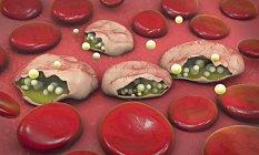 3d ilustración de células sanguíneas y parásitos del Plasmodium que causan malaria . - foto de stock