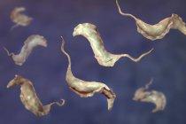Ilustración digital de parásitos tripanosómicos que causan la enfermedad de Chagas . - foto de stock