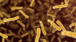 Бактерии Streptococcus pneumoniae, цифровая иллюстрация . — стоковое фото