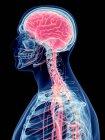 Cerebro humano y sistema nervioso sobre fondo negro, ilustración digital . — Stock Photo