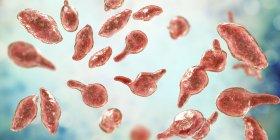 Mycoplasma genitalium parasitic bacteria, digital illustration. — Stock Photo