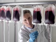 Mature male doctor processing donor blood in bags. — Stock Photo