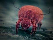 Паразит пылевых клещов, микроскопическая цифровая иллюстрация. — стоковое фото