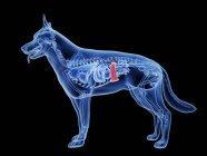Silueta para perros con bazo de color rojo sobre fondo negro, ilustración digital . - foto de stock