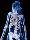 Esqueleto feminino em silhueta corporal transparente, ilustração digital . — Fotografia de Stock