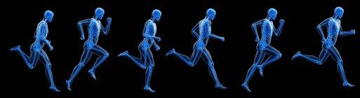 Ilustración digital compuesta del corredor con esqueleto visible . - foto de stock