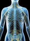 Nervensystem des weiblichen Oberkörpers, Computerillustration. — Stockfoto