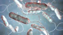 Ilustración digital de la bacteria Legionella pneumophila, causa de la enfermedad de Legionnaires . - foto de stock