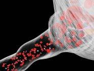 Vasos sanguíneos abstractos con glóbulos blancos y rojos, ilustración digital . - foto de stock
