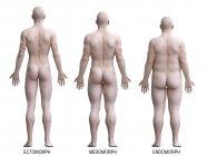 Masculino diferentes tipos de cuerpo en la vista trasera, ilustración del ordenador . - foto de stock