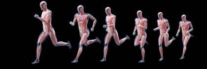 Silueta de corredor que muestra la anatomía de los músculos, ilustración por ordenador . - foto de stock