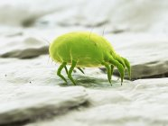 Зеленый цветной пылевой клец, цифровая иллюстрация. — стоковое фото
