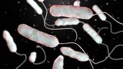 Цифровая иллюстрация бактерии Legionella pneumophila, причина болезни легионеров . — стоковое фото
