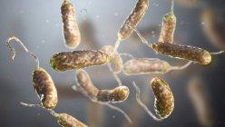 Bactérias Vibrio vulnificus encontradas na água do mar, ilustração colorida do computador . — Fotografia de Stock