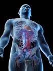Bajo ángulo en los vasos sanguíneos de la parte superior del cuerpo humano, ilustración digital . - foto de stock