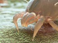 Parasite d'acarien de poussière, illustration numérique microscopique. — Photo de stock