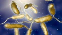 Vibrio vulnificus bacterias que se encuentran en el agua de mar, ilustración de computadora de color . - foto de stock