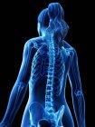 Esqueleto femenino en silueta de cuerpo transparente, ilustración digital . - foto de stock