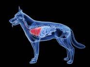Silueta para perros con pulmones de color rojo sobre fondo negro, ilustración digital . - foto de stock