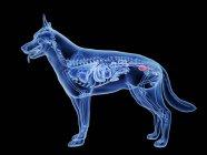 Silueta para perros con vejiga de color rojo sobre fondo negro, ilustración digital . - foto de stock