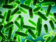 Абстрактные зеленые бактерии, компьютерная иллюстрация . — стоковое фото