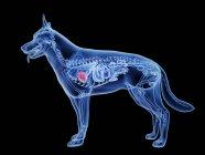 Corazón de perro, ilustración digital . - foto de stock