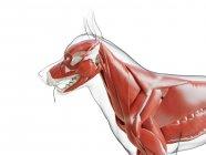 Silueta para perros con musculatura visible sobre fondo blanco, ilustración digital . - foto de stock