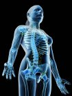 Cuerpo femenino mostrando esqueleto y sistema linfático, ilustración digital . - foto de stock