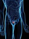 Prostata inflamada en cuerpo masculino abstracto, ilustración digital . - foto de stock