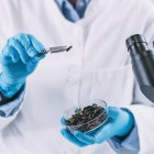 Hands of archaeologist analyzing charred wood in petri dish. — Stock Photo