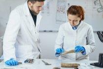 De jeunes chercheurs en archéologie en laboratoire démontrent l'utilisation du bois comme outil dans la préhistoire . — Photo de stock