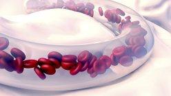 Glóbulos rojos en los vasos sanguíneos, ilustración digital . - foto de stock