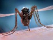 Mosquito feeding on human blood, digital illustration. — Stock Photo