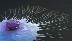 Migración de células de cáncer de mama, ilustración 3D digital . - foto de stock