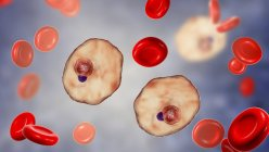Plasmodium ovale protozoan parasites and red blood cell in flow, computer illustration. — Stock Photo