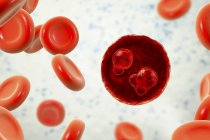 Protozoo Plasmodium falciparum, agente causal de la malaria tropical en los glóbulos rojos, ilustración digital . - foto de stock