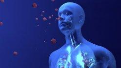 Ilustración conceptual de partículas de coronavirus que entran en los pulmones humanos . - foto de stock