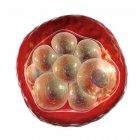 Glóbulos rojos infectados con Plasmodium sp. parásitos (en la etapa de esquizontes) que causan malaria, ilustración por computadora. - foto de stock