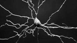 Célula nerviosa, ilustración por computadora - foto de stock