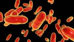 Bactérias da tosse convulsa (Bordetella pertussis), ilustração de computador — Fotografia de Stock