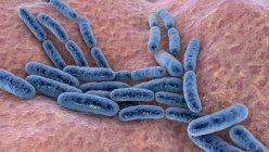 Lactobacillus bacteria, ilustración por ordenador. Este es el componente principal del microbioma del intestino delgado humano. - foto de stock