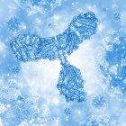 Ilustración de un anticuerpo o inmunoglobulina. Esta molécula en forma de y tiene dos brazos que pueden unirse a antígenos específicos, por ejemplo, proteínas virales o bacterianas. Al hacer esto marcan el antígeno para la destrucción por los fagocitos, glóbulos blancos tha - foto de stock